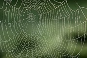 Dewdrops Prints - Spider Web Print by Adrian Bicker
