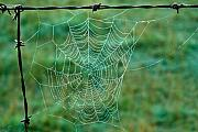 Arkansas Metal Prints - Spider Web in the Springtime Metal Print by Douglas Barnett