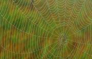 Sudbury Art - Spider Web, Tilton Lake, Sudbury by Mike Grandmailson