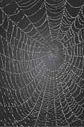 Spider Digital Art Posters - Spider web With Dew Drops Poster by Dave Gordon