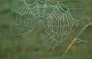 Friendly Spider Prints - Spider Web with Dew Drops Print by Douglas Barnett