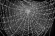 Graphics - Spider Web With Dew Drops No. 2 by Dave Gordon