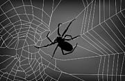 Spider Web With Spider Print by David Gordon