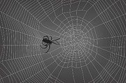Spider Digital Art Posters - Spider Web With Spider No. 2 Poster by Dave Gordon