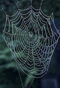 Dew Covered Posters - Spiders Web, Covered In Dew Poster by David Aubrey