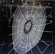 Joyce Woodhouse Posters - Spiders Web Poster by Joyce Woodhouse
