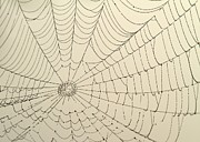 Goth Posters - Spiderweb at Dawn Poster by Sabrina L Ryan