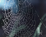 Author And Photographer Laura Wrede Posters - Spiderweb Blues Poster by Author and Photographer Laura Wrede