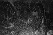 Gaspar Avila - Spiderweb