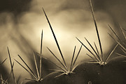 Sephia Photo Framed Prints - Spiked Framed Print by Melanie Moraga