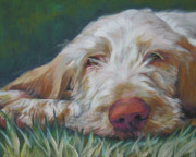 Pup Painting Framed Prints - Spinone Italiano Orange Framed Print by Lee Ann Shepard