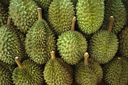 Durian Prints - Spiny Green Durian Fruit Sold Print by Todd Gipstein
