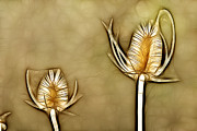 Grow Digital Art - Spiny plants in abstract by Odon Czintos
