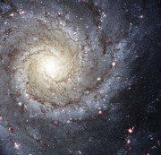 Pisces Photos - Spiral Galaxy M74 by Stocktrek Images