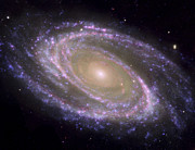 Cosmic Posters - Spiral Galaxy Messier 81 Poster by Stocktrek Images