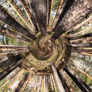 Taide Prints - Spiral of Forest Print by Jouko Lehto