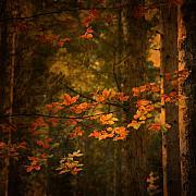 Philippe Sainte-Laudy - Spirit Fall