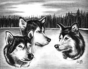 Huskies Drawings Prints - Spirit Guides  Print by Peter Piatt