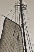 White Digital Art Originals - Spirit of South Carolina Schooner Sailboat Sail by Dustin K Ryan