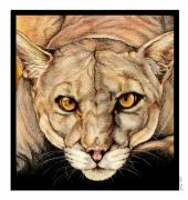 Cat Portraits Prints - Spirit of the Everglades Print by Sheryl Unwin