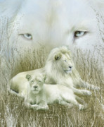 Lioness Mixed Media Posters - Spirit Of The White Lions Poster by Carol Cavalaris