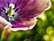 Fine Art Flower Photography Posters - Splash Poster by Jason Naudi Photography