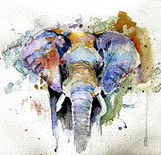 Abstract Elephant Framed Prints - Splash of colour Framed Print by Steven Ponsford
