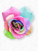 Robert Matson - Splendor Rose