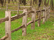 Split Rail Fence Photos - Split rail fence by Penny Neimiller