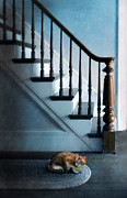 Scared Framed Prints - Spooked Cat by Stairs Framed Print by Jill Battaglia