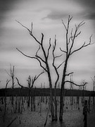 Manasquan Reservoir Prints - Spooky Pond Trees Print by Amy Kurutz
