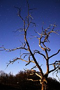 Moonlit Night Photo Prints - Spooky Tree Print by Larry Ricker