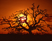 Golden Sky Prints - Spooky Tree Print by Stephen Anderson