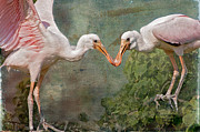Juveniles Prints - Spoonbill Siblings Print by Bonnie Barry