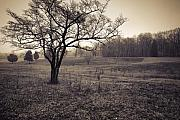 Civil Photos - Spotsylvania Battlefield by Harry H Hicklin