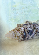 Seashell Digital Art Photos - Spotted Auger Seashell by Betty LaRue