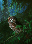 Nick Gustafson - Spotted Owl in ancient forest