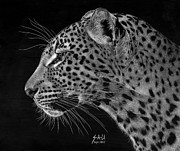 Scratchboard Art - Spotted Solitude by Sheryl Unwin
