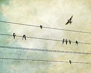 Bird On A Wire Prints - Spread My Wings And Fly Print by Violet Damyan