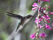 Saija  Lehtonen - Spread Your Wings and Fly