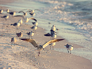 Fort Myers Beach Prints - Spread Your Wings Print by Kim Hojnacki