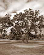 Live Oak Digital Art - Spreading Tree by Phill  Doherty