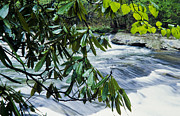 Birch River Prints - Spring along Birch River Print by Thomas R Fletcher