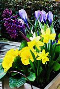 Flower Basket Photos - Spring Basket by Marion McCristall