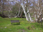 Sycamore Grove Park Framed Prints - Spring Bench in Sycamore Grove Park Framed Print by Carol Groenen