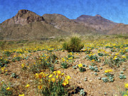 Desert Digital Art Posters - Spring Bloom Franklin Mountains Poster by Kurt Van Wagner