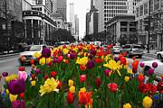 Jeff Lewis - Spring Bloom