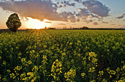 Field. Cloud Prints - Spring Bloom Print by Padraic Giardina