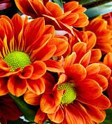 Barbara Drake - Spring Blooms
