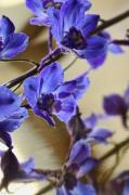 Blue Delphinium Photos - Spring Blooms by Lauren Radke